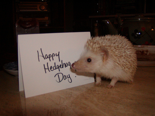 Hedgehog Day 187 Segabits 1 Source For Sega News